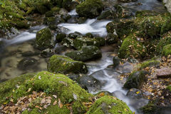 A Mountain Stream Stock Photography