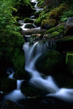 Mountain stream. Beautiful mountain stream with green moss and rocks Stock Image