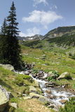 Mountain stream. In parang mountains , Romania Royalty Free Stock Images