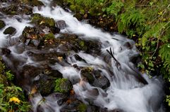 Mountain stream. Peaceful mountain stream in Northern Oregon Royalty Free Stock Image