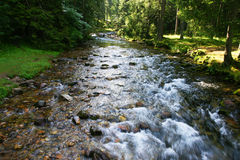 Mountain stream. In the Polish Tatras Stock Images