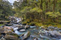 Mountain Stream. A mountain stream rushing through a beech tree forest Royalty Free Stock Photos