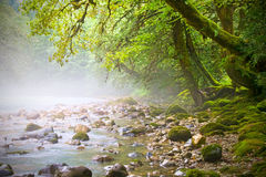 Mountain stream. Fairy trees on the banks, morning Stock Image