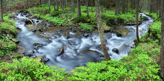 Mountain stream. In the pine forest Royalty Free Stock Images