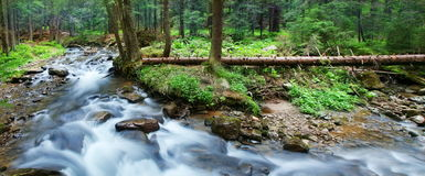 Mountain stream. In the pine forest Stock Photos