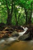 Mountain stream. Tropical moutain stream in a morning Stock Photos