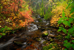 Mountain Stream. Fall foliage and mountain stream stock photos