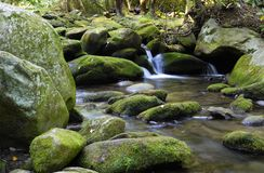 Mountain stream. Peaceful mountain stream in Smokey Mountains in Tennessee Royalty Free Stock Photography