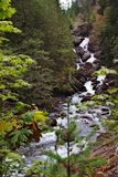 Mountain Stream. A fast moving stream can be seen through some foliage royalty free stock photography