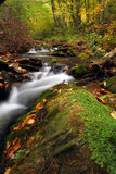Mountain Stream. Creek deep in the woods during fall of the year Royalty Free Stock Images