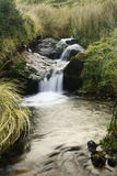 Mountain stream. Flows through green moss and grass Royalty Free Stock Photo