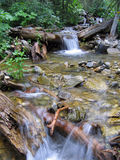 Mountain Stream. In New Mexico Stock Image
