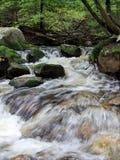 Mountain stream. Water flows along a mountain stream (green toned Stock Photos