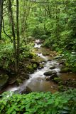 Mountain Stream. Small Mountain Stream in the Summer Stock Photography