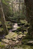 Mountain Stream. A mountain stream in a dense forest setting royalty free stock images
