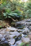 Mountain stream. A mountain stream making its way among the rocks in an Australian national park (Otway Ranges Royalty Free Stock Photos