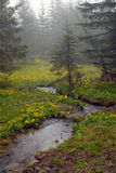 Mountain stream among Stock Image