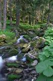 Mountain stream. Pass through the forest at mountain Royalty Free Stock Photos