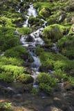 Mountain stream. With vegetation Royalty Free Stock Photo