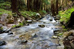 Mountain stream. Motion blur on a stream running through the forrest Stock Photo