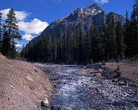 Mountain stream, Alberta, Canada. Stock Photos