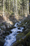 Mountain stream in Alpine forest Royalty Free Stock Photos