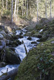 Mountain stream in Alpine forest Royalty Free Stock Photo