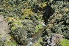 Mountain stream in the Antisana Ecological Reserve, Ecuador Royalty Free Stock Photo