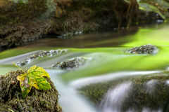 Mountain Stream. Mountain Stream in the Autumn Royalty Free Stock Photo