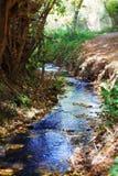 Mountain stream in autumn Royalty Free Stock Image
