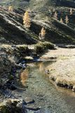 Mountain Stream in Autumn. Clear little stream on the mountainside flowing leisurely inmidst autumnal meadows high up in the mountains. In the background golden Stock Photo
