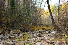 Mountain stream in autumn forest Royalty Free Stock Photos