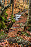 Mountain stream in autumn forest Stock Image
