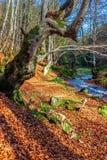Mountain stream in autumn forest Stock Photos