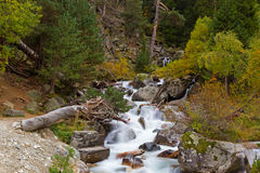 Mountain stream autumn forest. Mountain stream by an autumn surrounded by forest with trees with yellow foliage and stones Royalty Free Stock Photos
