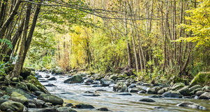 Mountain stream in autumn. Mountain stream in the green forest in autumn Royalty Free Stock Photo