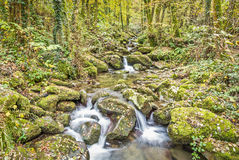 Mountain stream in autumn Stock Images