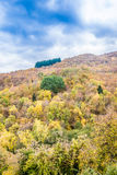Mountain stream in autumn. Mountain stream in the green forest in autumn Royalty Free Stock Photos