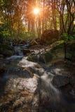 Mountain stream in autumn in Monchique. Royalty Free Stock Photos