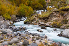Mountain stream autumn. Mountain stream by an autumn surrounded by trees with yellow foliage and stones Royalty Free Stock Photo