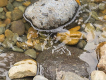 Mountain stream. At  autumn time.Stones and running water Royalty Free Stock Images