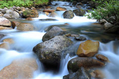 Mountain stream, Ayder plateau Royalty Free Stock Images