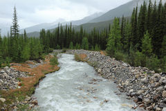 Mountain stream in Banff National Park Stock Image