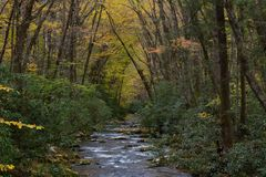 Mountain stream with banks of rhododendron and arching trees with yellow autumn leaves. Great Smoky Mountains, horizontal aspect royalty free stock image