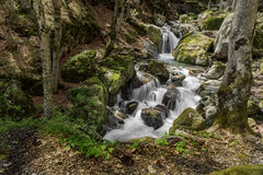 Mountain stream. Among beautiful nature Stock Photography