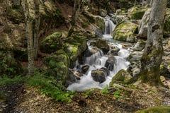 Mountain stream Stock Photography