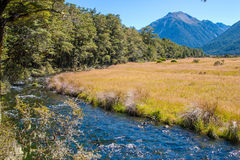 Mountain Stream. Through the beech forest. Hawden river, Mid Canterbury, New Zealand. Southern Alps Stock Images