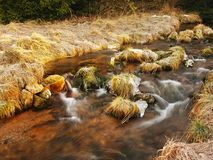 Mountain stream at beginning of winter time, old orange dry grass. Mountain stream at beginning of winter time, old orange dry grass on both banks, ice on Royalty Free Stock Images