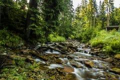 Mountain stream. Stream in Beskidy mountains, Poland stock photos