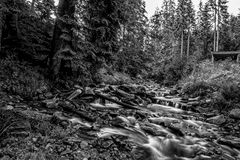Mountain stream. Stream in Beskidy mountains, Poland stock photography